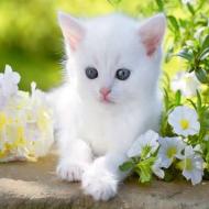 Cute_pearl
